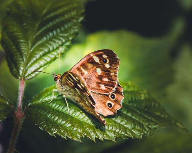 Close-up of butterfly on leaf