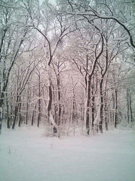 romania wood Bare Tree Tree Tranquility