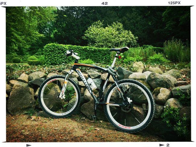 Bike Made In Italy Bottecchia Make A Break