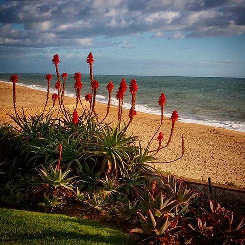Tas se bem no Algarve Foto: @nmsf70 / Nelson Ferreira