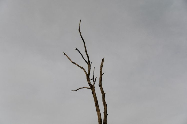 Low Angle View Branch Nature Bare Tree No People Sky Dried Plant Outdoors Dead Tree Beauty In Nature Tree Plant Scenics Day EyeEm Best Shots Beautiful Eye4photography  EyeEm Nature Lover Nature_collection The Week Of Eyeem Check This Out Finding New Frontiers Focus On Foreground Nature Field