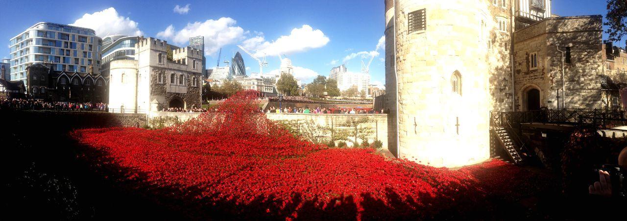 Poppy War Memorial Death Tower Of London Red Blood London