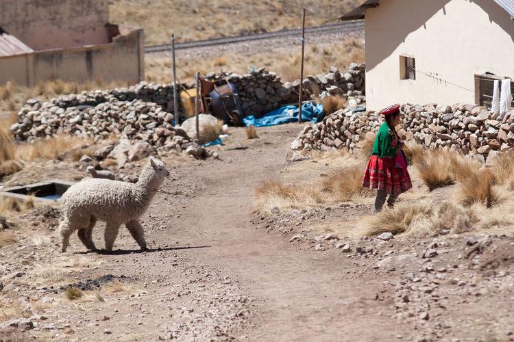 Lama And Woman Walking In Village