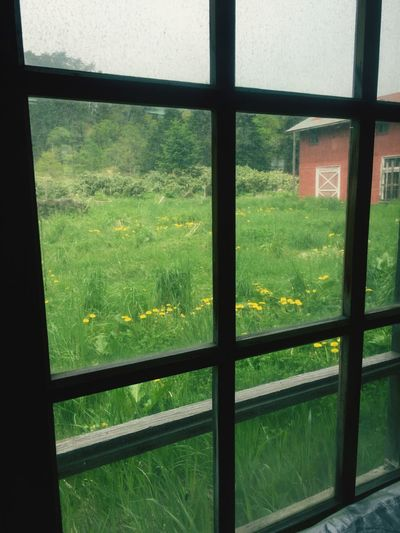 Window Glass - Material Green Color Grass