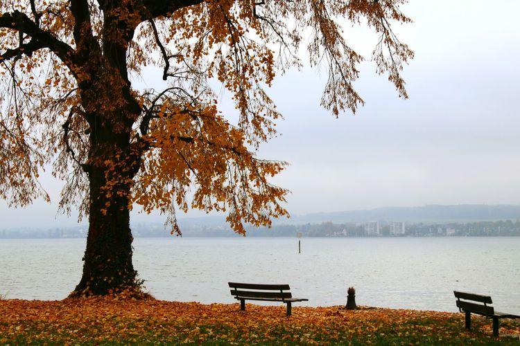 Autumn Autumn Collection Autumn Colors Autumn Leaves Autumn🍁🍁🍁 Bench Bodensee Cityscape Cityscapes Lake Lake Scape Lake View Lakeshore Lakeview