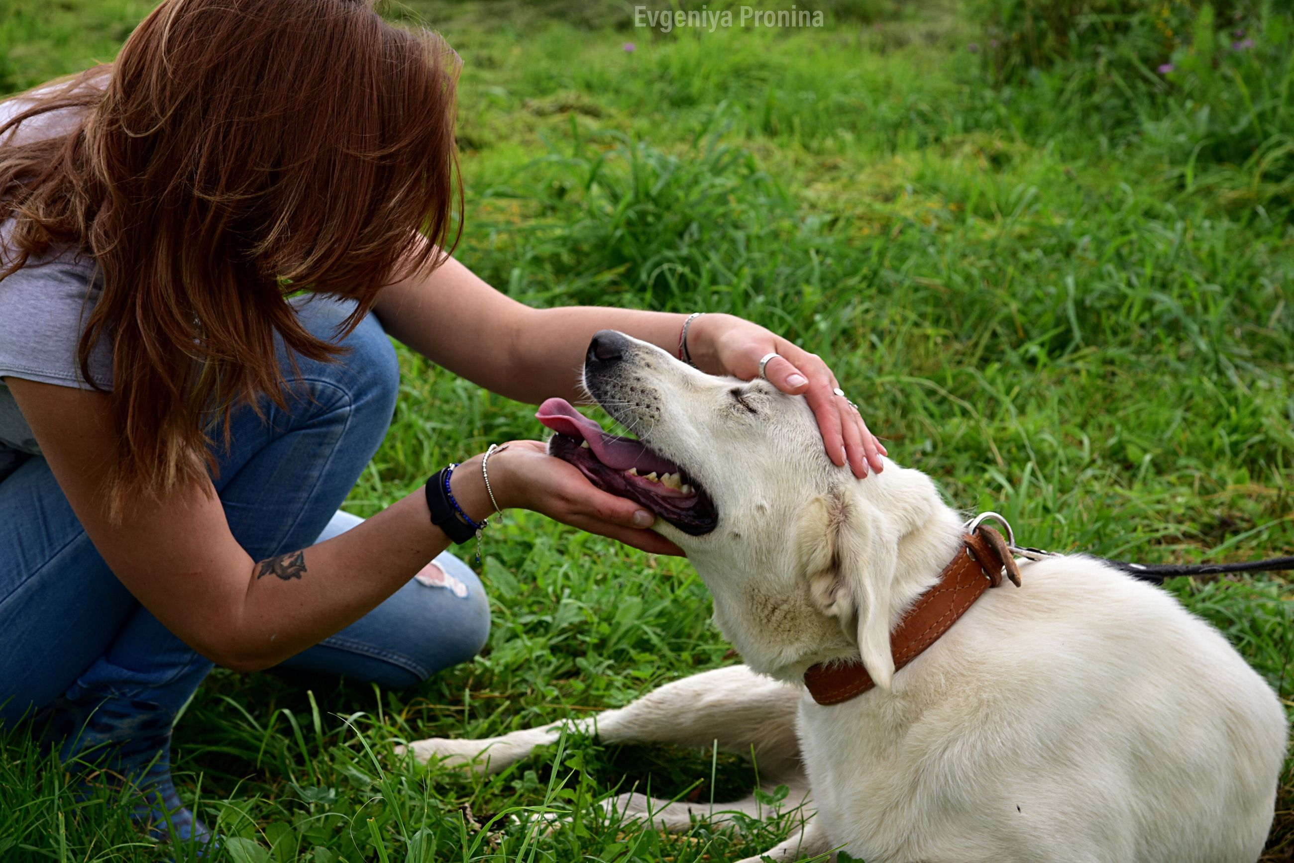 domestic, pets, domestic animals, mammal, real people, one animal, canine, dog, grass, field, one person, vertebrate, leisure activity, women, adult, land, plant, pet owner, outdoors, hairstyle, care