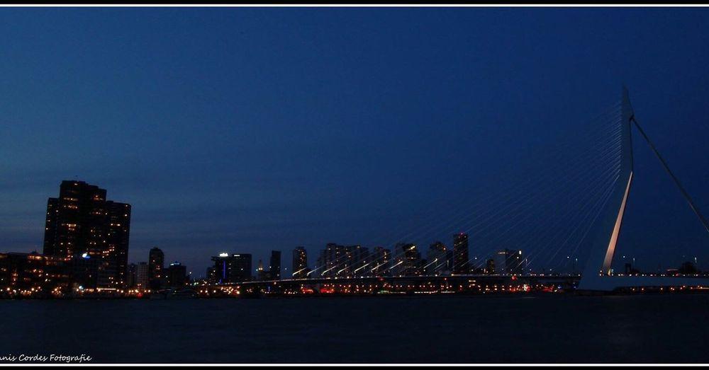 Hollandamerikakaderotterdam Erasmus Bridge Erasmusbrug Rotterdam Nikonphotography Nightphotography Nikon Nikond50