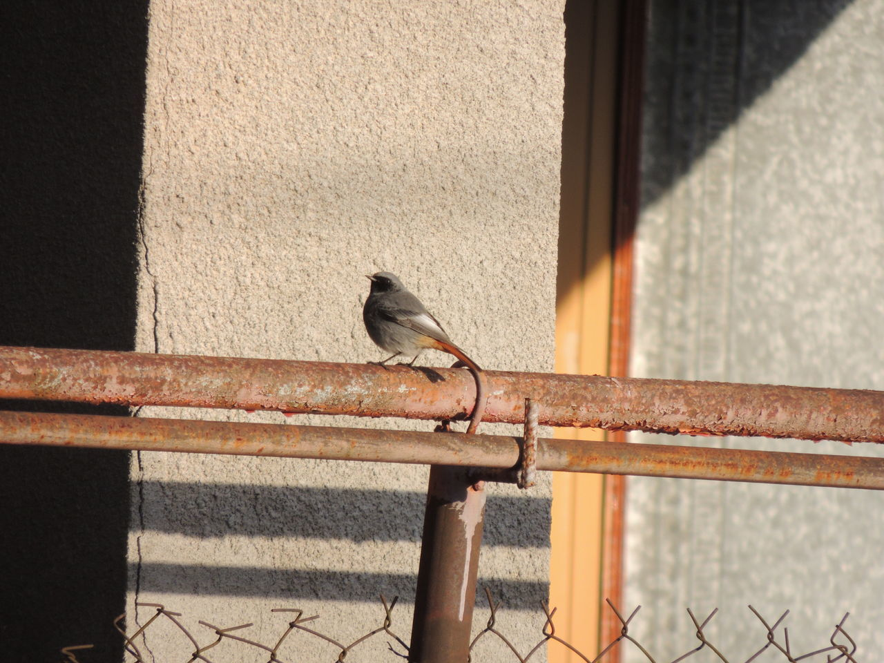 one animal, animal themes, bird, animals in the wild, animal wildlife, perching, sunlight, railing, day, outdoors, no people, retaining wall, nature, sparrow, building exterior, architecture