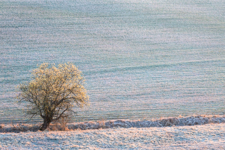 Bare tree on field during winter