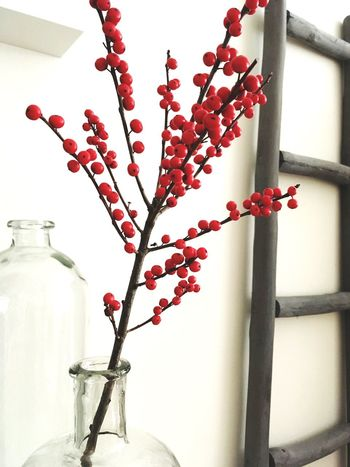 Ilex Home Indoors  Day Home Sweet Home No Flowers No Life Red
