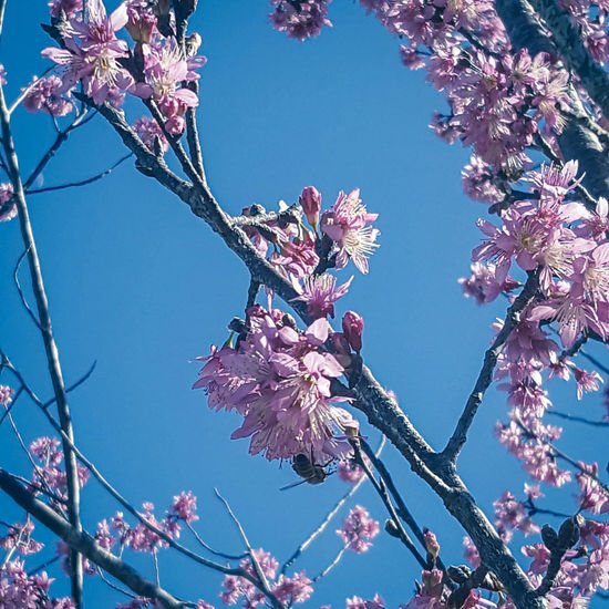 Branch Low Angle View Tree Springtime Blossom Nature Flower Beauty In Nature Outdoors Clear Sky Sky Day Fragility Tadaa Community Flowers Gardening Garden Flowers And Trees Trees Blooms Close-up Freshness Clear Sky Nature Beauty In Nature