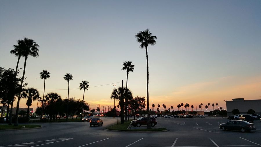 Cars On City Street By Silhouette Coconut Palm Trees Against Clear Sky During Sunset