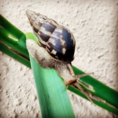 Be Diligent as this Snail ... Slowandsteady . WorkWednesday