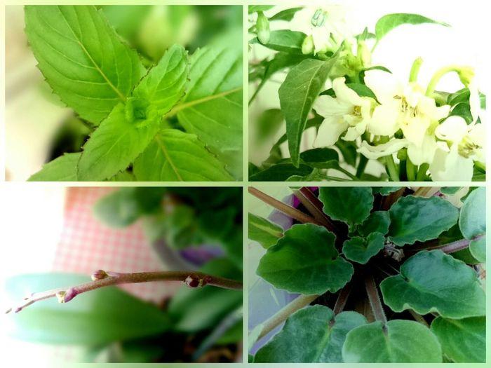 Benim canım orkidemmm,menekşem yeni çiçek açarmışşş,biberim bol bol çiçek dökermişşş,reyhanımm misler gibi kokarmışşş 👼👼👼