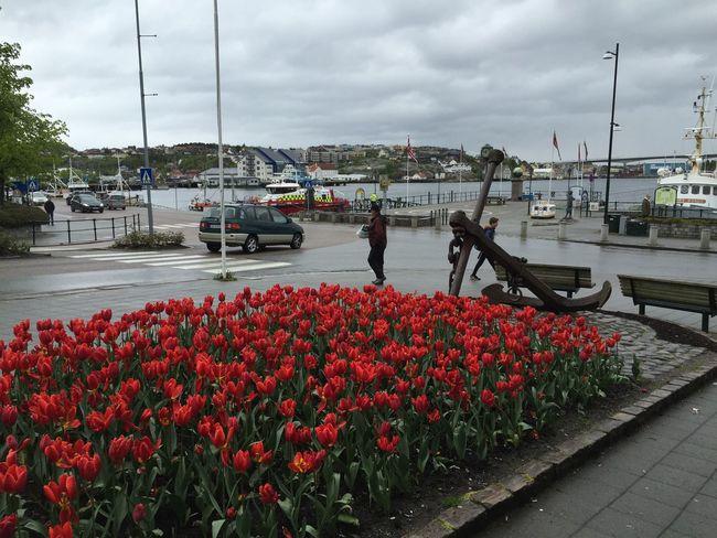 Nun sind wir in Kristiansund. Das Wetter bleibt besch***en.
