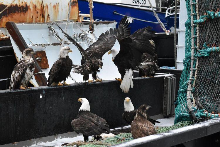 Eagles perching at harbor