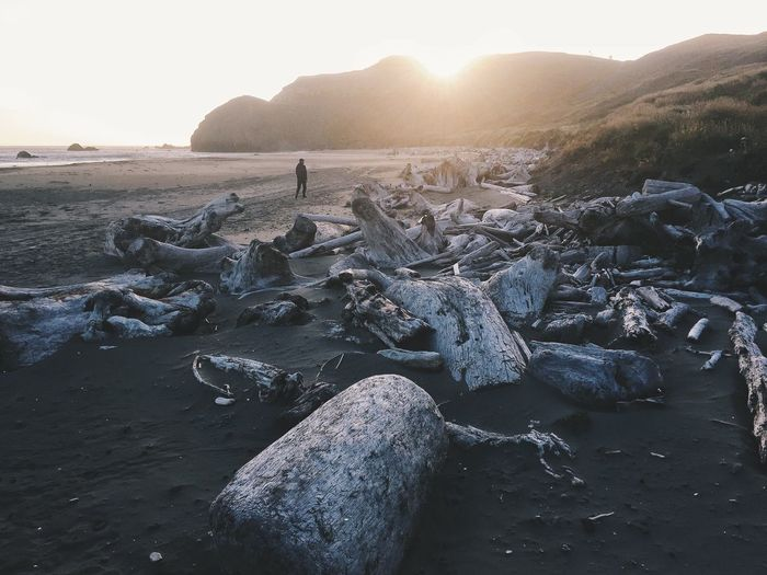 Driftwood at sandy beach during sunset