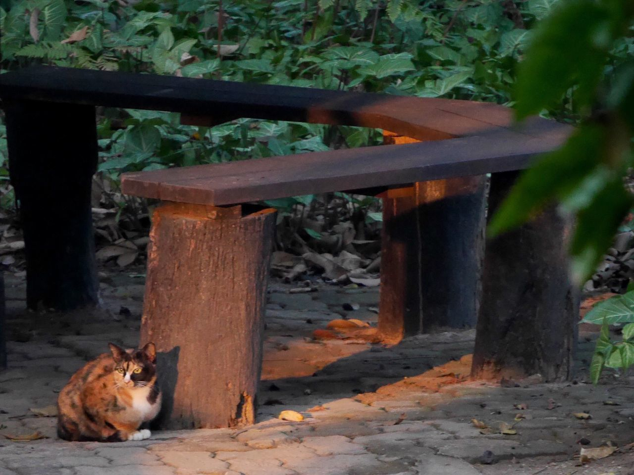 Cat Sitting By Wooden Bench