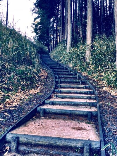 Stairs Forest Kyoto 階段 ジブリっぽい