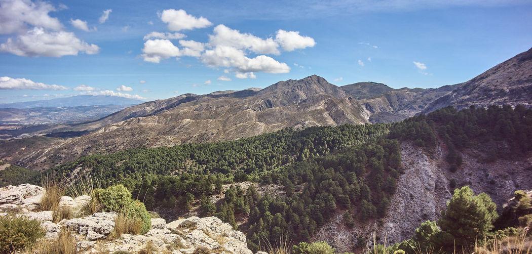 Beautiful Nature Beautiful Views Clouds In The Sky Hikes Hiking Forests Hiking Spain La Maroma Mountain Peak Mountain Range Sea Of clouds Sierra Tejeda