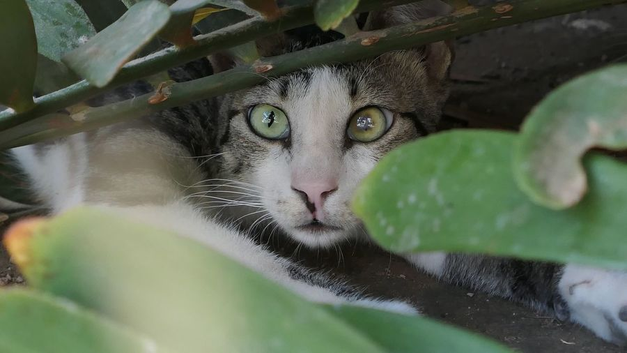 Domestic Cat Portrait Close-up Green Color Headshot Leaf Plant Looking Day Looking At Camera Cat One Animal Feline Selective Focus Outdoors Nature