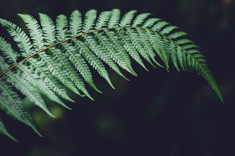 Leaves green Dark Leaf detail In the natural forest Growth Green Color Leaf Plant Part Plant Close-up Fern Nature Beauty In Nature No People Focus On Foreground Selective Focus Day Natural Pattern Outdoors Freshness Vulnerability  Fragility Tranquility Pattern Leaves Spiky Palm Leaf