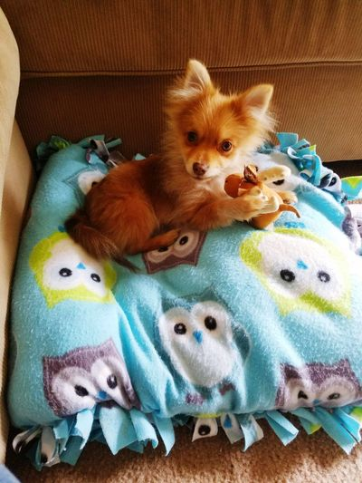 What are you looking at??? Its A Dogs Life Pomeranian Pompuppy Puppy Love Puppy❤ Puppylife Puppyplaying