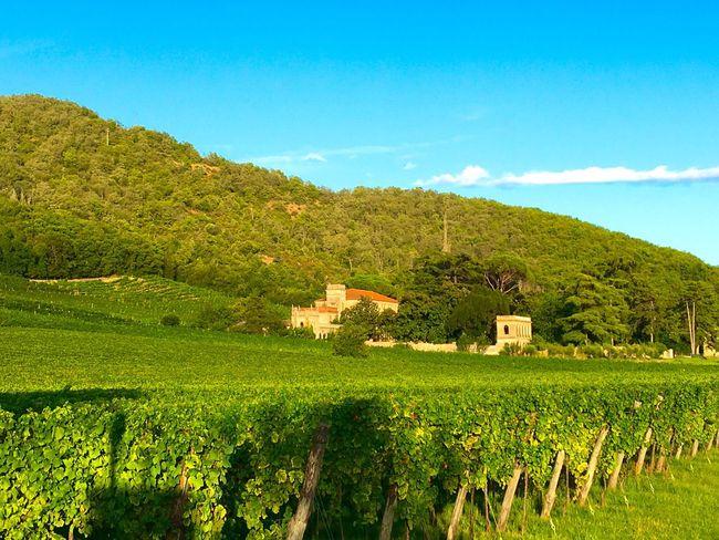 Galzignano Terme Galzignano Terme Colline Natura Landscape_photography Landscape Vigne Winelands Wines Colli Euganei Padova Veneto Veneto Italy IPhoneography Iphonephotography IPhone Photography Iphone6 Countryscape