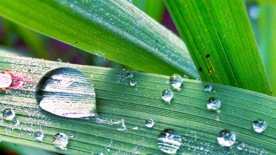 Water Embun Pagi Setitik Harapan