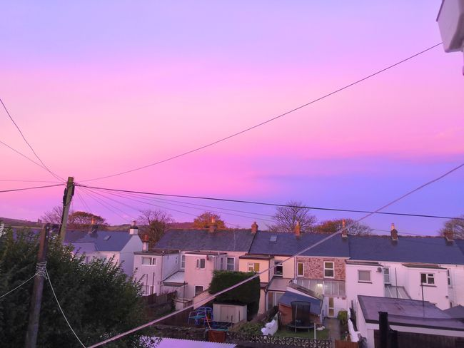 Sunset Bird Multi Colored Pink Color Cable Telephone Line Pastel Colored Sky Architecture