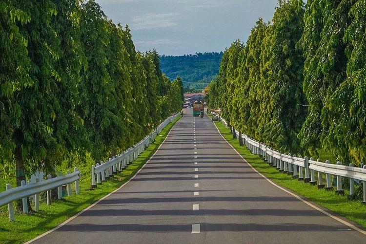 Street Amidst Trees Against Sky