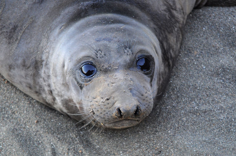 Close-up of seal on beach