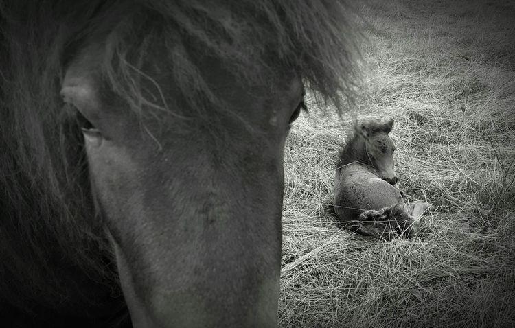 Horses Little Horse Pony Hello World Black & White