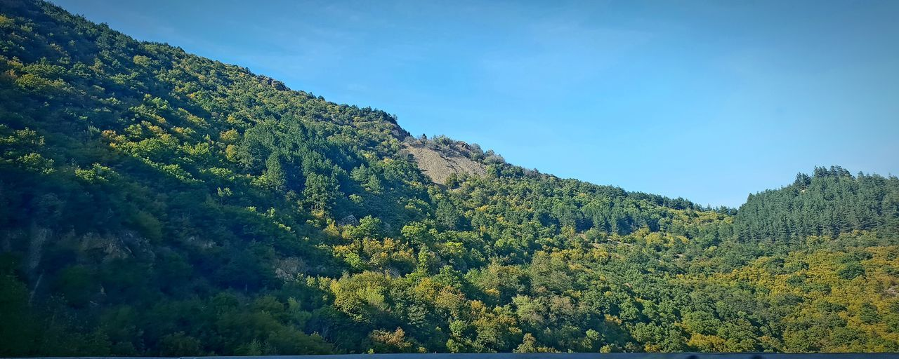 NATURE Nature EyeEmNewHere Tree Tree Area Forest Leaf Blue Mountain Sky