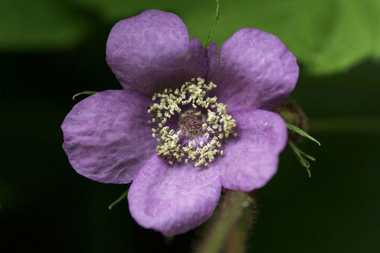 Beauty In Nature Close-up Flower Flower Head Flowering Plant Growth Nature Petal Pollen Purple Purple Flower Selective Focus
