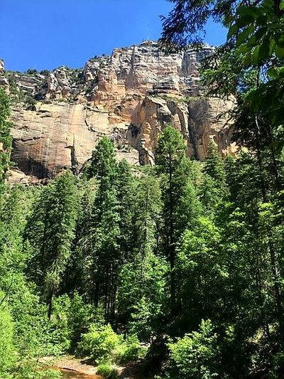Low angle view of trees on cliff