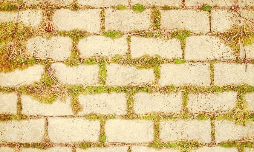 Groundcover Textures And Surfaces Nature in The City Green