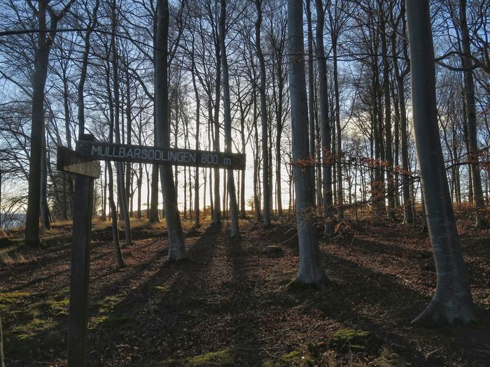 Forest Walking Sign Post Information Birch Trees Paths Outdoors Nature Tranquility Sky
