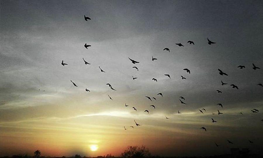Avoiding light... Main_vision ,IGDaily Ig_masterpiece Ig_sunsetshots Ig_shotz Sunset_hub Sky_sultans Ig_myshot Birds Silhouette Art_pure Instagram VSCO Vzcomood