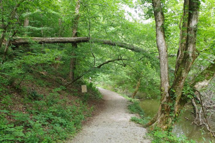 Riverwalk Beauty In Nature Branch Day Forest Green Color Nature No People Outdoors Scenics The Way Forward Tranquility Tree Tree Trunk