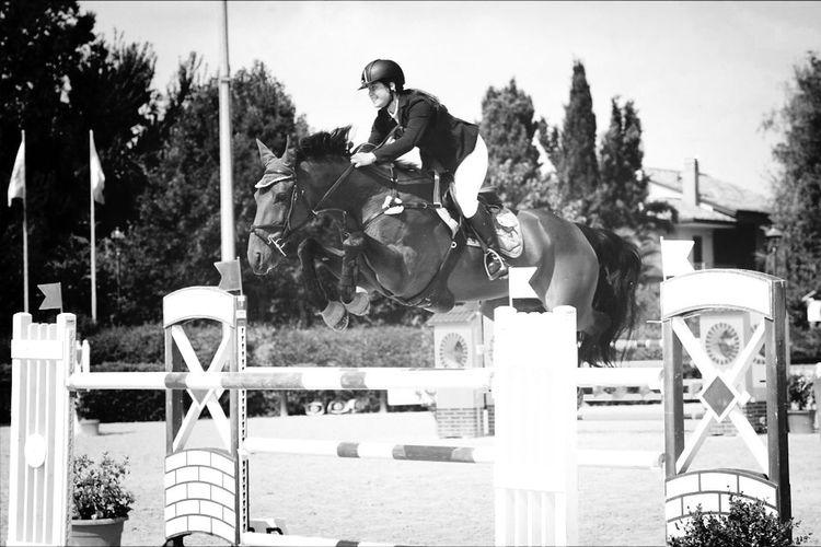 Apollo Horse Showjumping Animals Love