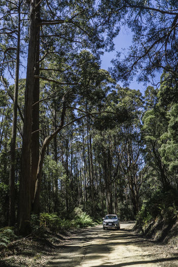 Car on road amidst trees in forest