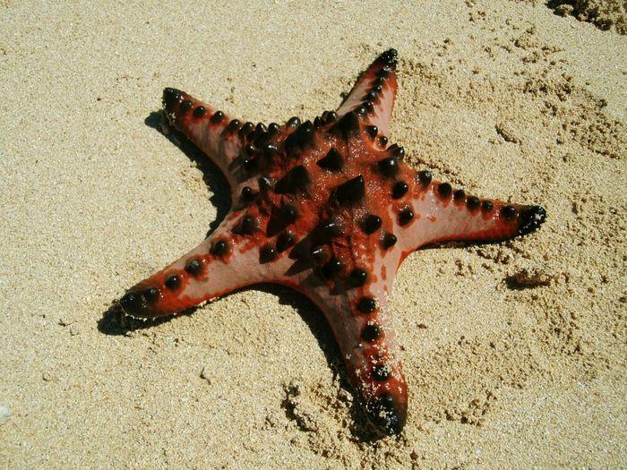Spongebob's favorite... Starfish  Starfish At Beach Starfishes Starfish And Clams