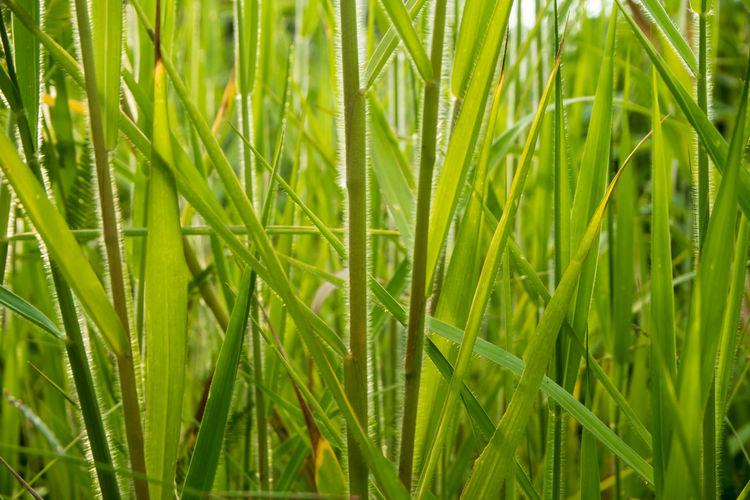 Freshness Grass