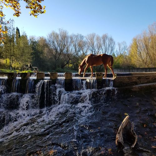 horse Waterfall