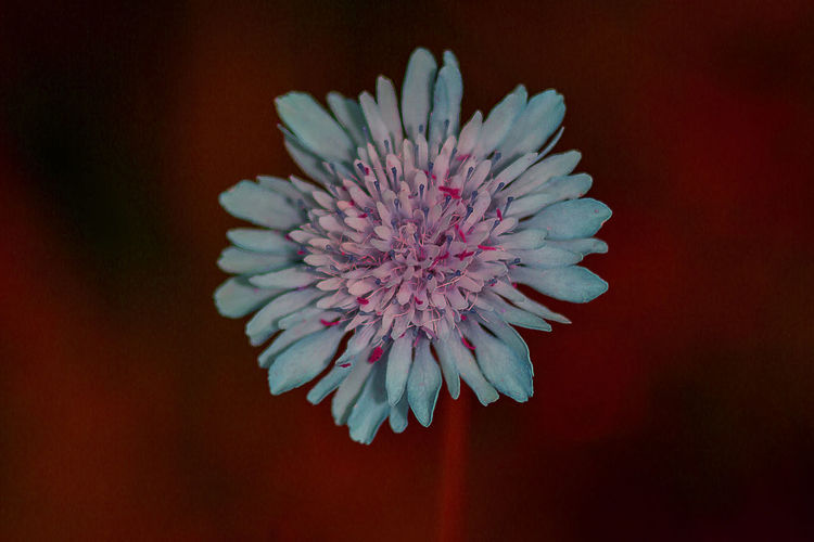 Close-up of blue flower