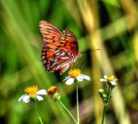 EyeEm Nature Lover Tadaa Community EyeEm Best Shots - Nature Macro