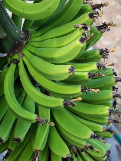 Close-up of bananas