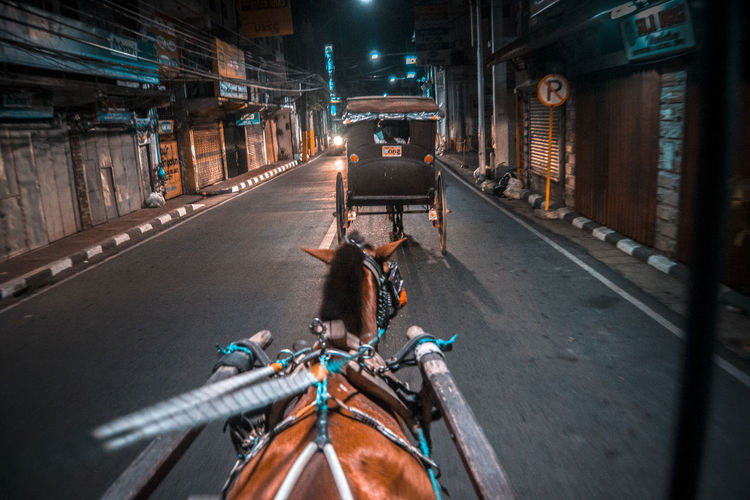 Horse Cart On Road At Night