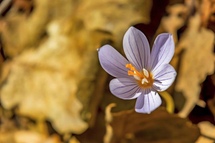 close up spring